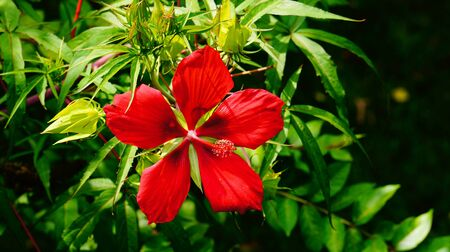 Bright Red Flower Stock Photo - 21930806