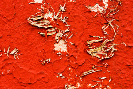 Old red scratched wall with withered plant Banco de Imagens