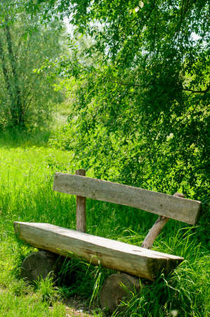 Old wooden bench with trees background. Sunny spring day.