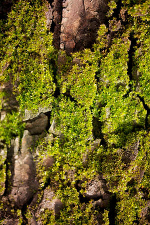 Close-up photo of mossy tree trunk. Old bark Stock Photo