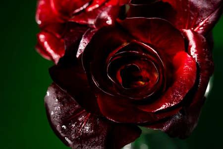 Gorizia, also known as Rosa di Gorizia, an expensive and valuable variety of Italian radicchio.
