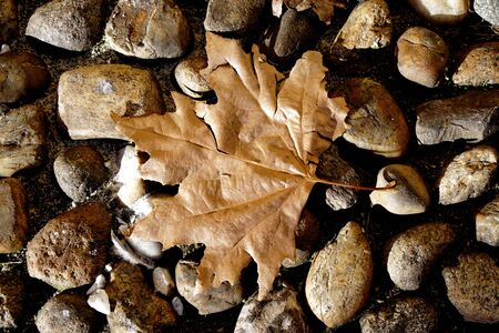 dead leaf: Close up of a dead leaf on pebbles Stock Photo