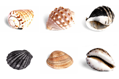 Collection of Mediterranean sea shells on white background