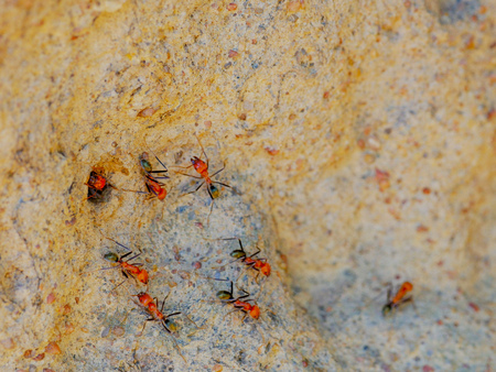 a macro shot of spinifex termites entering and exiting a cathedral termite mound in australia's northern territory Stock Photo