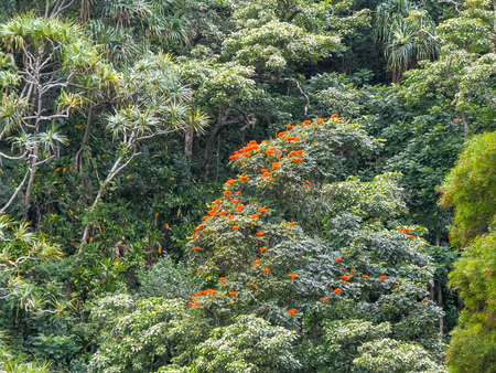 rain forest growing beside the road to hana, maui Banque d'images - 117198447