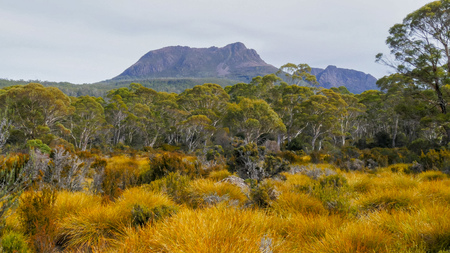 the view of mt gould and the buttongrass plains of tasmania's lake st clair national park Banque d'images