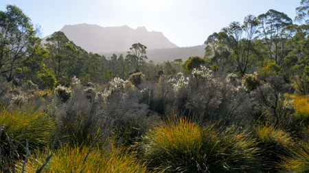 a high key shot of the late afternoon sun dropping towards mt ossa backlighting trees and shrubs in the cradle mountain national park
