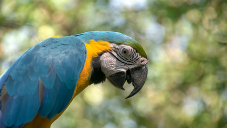 extreme close up of a blue and gold macaw perched on a tree 写真素材