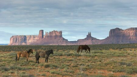 morning shot of three horses grazing at monument valley in utah Stock Photo