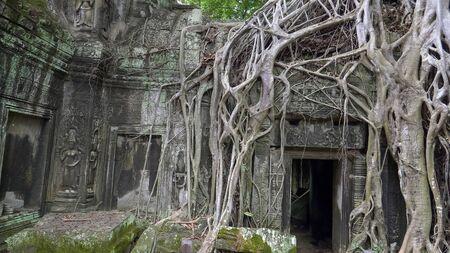 strangler fig roots at ta prohm temple in angkor Foto de archivo