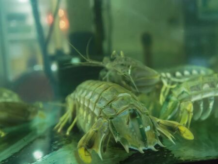 close up of mantis shrimp in a restaurant at Chinatown