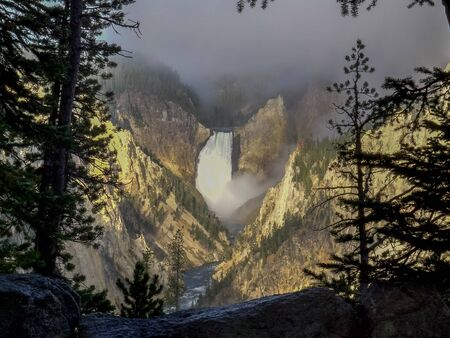 lower falls framed by trees on a foggy morning in yellowstone