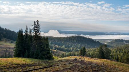 dunraven pass with morning fog and a copse of trees in yellowstone