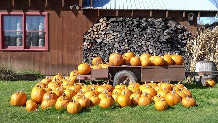 Plan large de citrouilles d'automne sur une remorque au Vermont