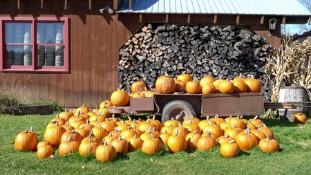 wide shot of fall pumpkins on a trailer in vermont