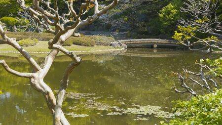 koi pond and bridge at the imperial palace in tokyo