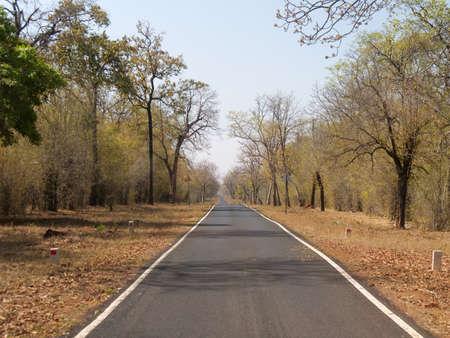 a road and vegetation at tadoba andhari tiger reserve