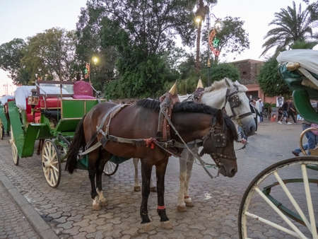 two horses with carriage waiting for fares near the main market in marrakech