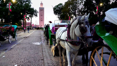 night shot of a queue of horses and carriages waiting for fares near the main market in marrakech, morroco