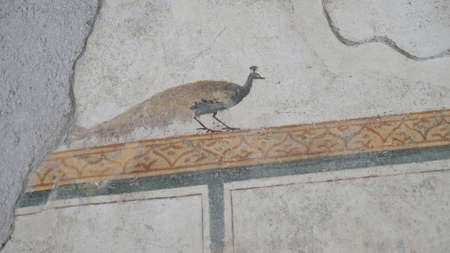 NAPLES, ITALY- JUNE, 13, 2019: a peacock fresco on the wall of a house at pompeii
