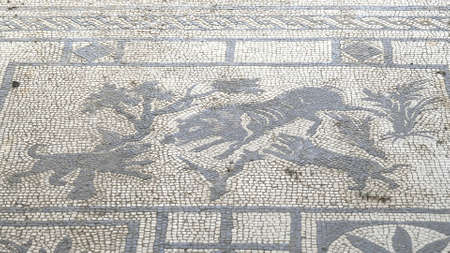 NAPLES, ITALY- JUNE, 13, 2019: close view of a dogs and boar mosaic at pompeii