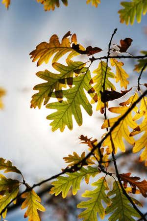 autum: Beautiful autum leaves against sky