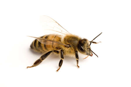 drones: Operaio ape su superficie bianca
