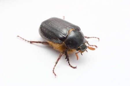 eradication: Extreme marcro photo of beetle