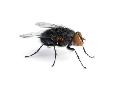 insectiside: Extreme macro of a common housefly