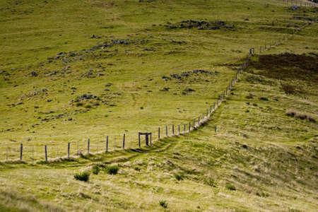 fenceline: Old fence in a green field