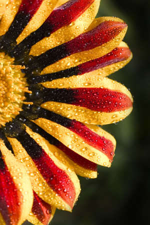 thrive: Beautiful photo of a flower Stock Photo