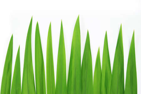 Closeup grass on a white background Stock Photo