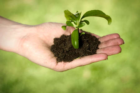 Hand holding dirt and plant Stock Photo