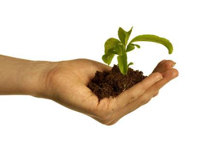 giver: Mano celebraci�n de la suciedad y las plantas