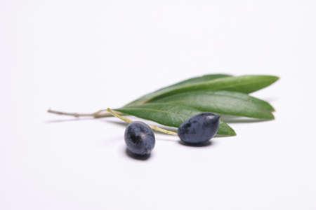 foglie ulivo: Con foglie d'oliva Olive su sfondo bianco Archivio Fotografico