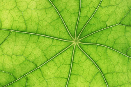 Beautiful green leaves with veins visible