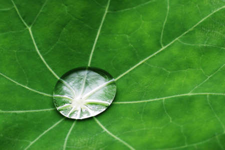 Water drop on leaf closeup Stock Photo