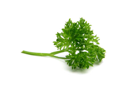 Isolated Parsley on a white background