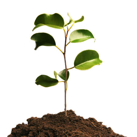 Growing green plant in soil Stock Photo