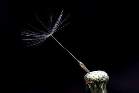 breakable: Last seed hanging on to plant Stock Photo