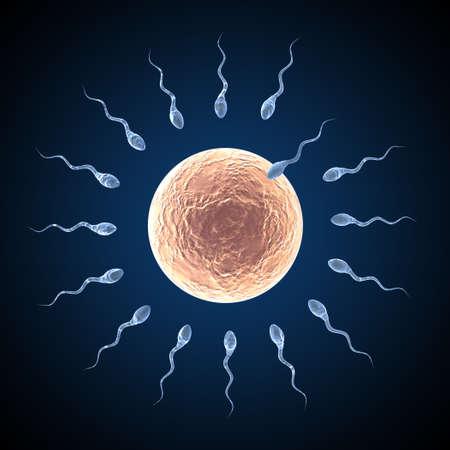 esperma: Sperm acercando huevo sobre fondo azul oscuro