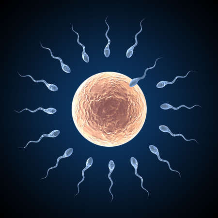 Sperm approaching egg on a dark blue background Stock Photo