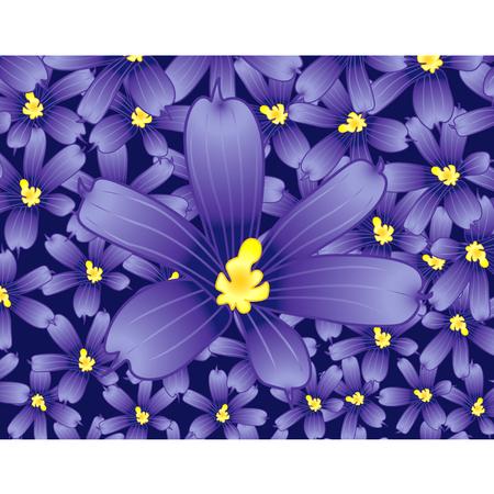 Blue-eyed bloem veld