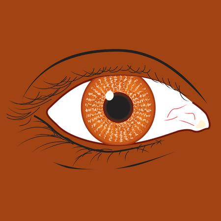 Brown oog van een zwarte ras vrouw Stock Illustratie