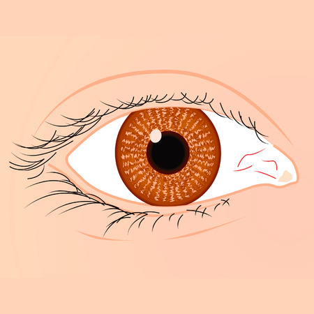 eyelid: Brown eye of a white race woman