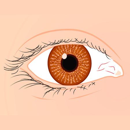 Bruin oog van een witte race vrouw