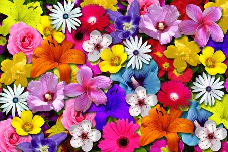 Colorfully floral scene Stock Photo