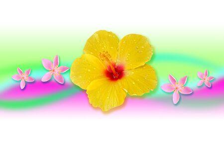 colorfully: Beauty yellow hibiscus flower hawaiian paradise