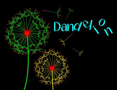 Dandelion flower night scene