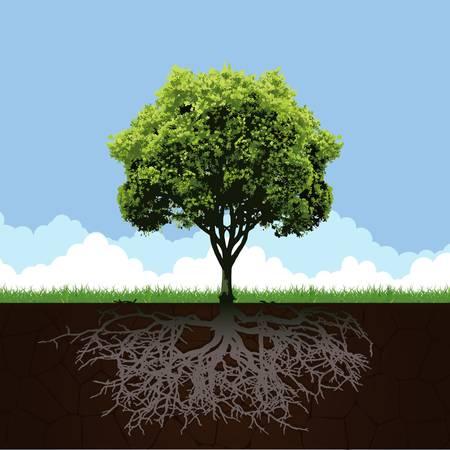 Árbol con la raíz y el pasto